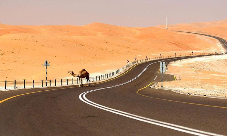 Liwa Full day Desert Safari